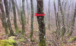 Red arrow. On the tree in the woods Stock Image