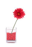 Red artificial flower in a square vase Stock Photos