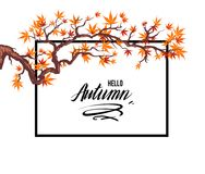 Frame autumn leaves Royalty Free Stock Image