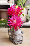 Red aster flower and glass vases Stock Image