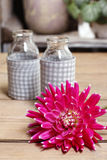Red aster flower and glass vases Stock Photography