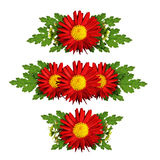 Red aster flowers compositions Royalty Free Stock Photo