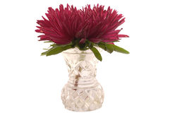 Red aster in the vase Stock Photo