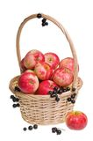 Red Astrachan Apples and Grapes Royalty Free Stock Image