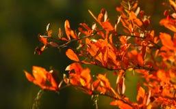 Red autumn Stock Photo