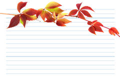 Red autumn branch of grapes leaves on notebook paper Stock Image