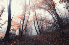 Red autumn enchanted forest Royalty Free Stock Photography