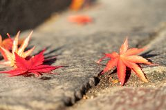 Free Red Autumn Fall Leaves On Sidewalk In City Stock Images - 161295014