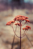 Red autumn flower. Forest rustic scene Royalty Free Stock Photos