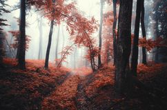 Red autumn forest. Enchanted forest scene with mysterious fog Royalty Free Stock Photos