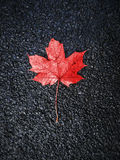 Red autumn leaf on black asphalt background Royalty Free Stock Photos