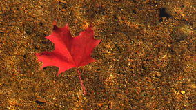 Red autumn leaf floating stock video footage