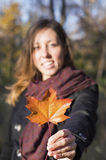 Red autumn leaf in girl hands Royalty Free Stock Images