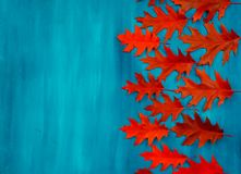 Red oak leaves pattern on a blue background. Red autumn leaf oak isolated on white background royalty free stock photography