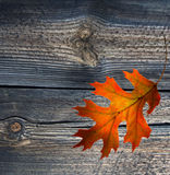 Red autumn leaf on old wood background Royalty Free Stock Photo