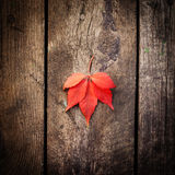 Red autumn leaf on old wooden background Royalty Free Stock Image