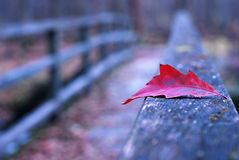 Red autumn leaf on old wooden bridge Stock Images