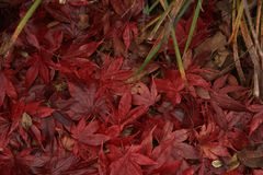 Fall leaves in a pile. royalty free stock photo
