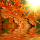 Red autumn leaves. Reflecting in the water Royalty Free Stock Photos