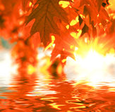 Red autumn leaves Royalty Free Stock Photos