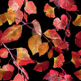Red autumn leaves, black background. Seamless contrast autumn pattern. Watercolor Royalty Free Stock Photography