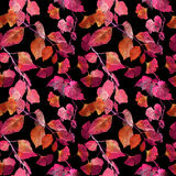 Red autumn leaves, black background. Seamless contrast autumn pattern. Watercolor Royalty Free Stock Images