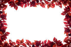 Red autumn leaves border Stock Images
