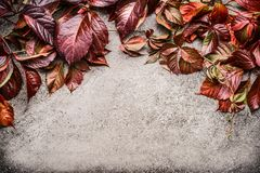Red autumn leaves border on gray stone background, top view. Royalty Free Stock Image