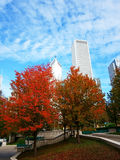 Red Autumn Leaves, Chicago Stock Image