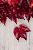Red autumn leaves Stock Photography
