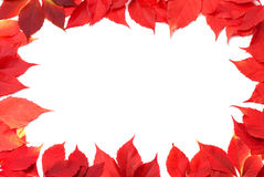 Red autumn leaves frame isolated on white background Royalty Free Stock Images