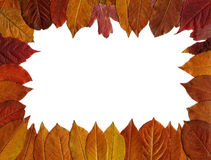 Red autumn leaves frame Royalty Free Stock Photo