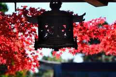 Red autumn leaves and hanging lantern, Kyoto Japan. Royalty Free Stock Images