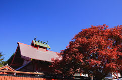 Red autumn leaves and shrine, Kyoto Japan. Royalty Free Stock Photo