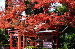 Red autumn leaves and shrine, Kyoto Japan. Stock Photography