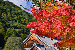 Red autumn leaves and shrine, Kyoto Japan. Stock Photos