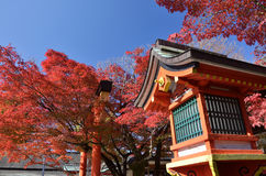 Red autumn leaves and shrine, Kyoto Japan. Stock Photo