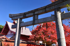Red autumn leaves and shrine's Torii gate, Kyoto Japan. Royalty Free Stock Image