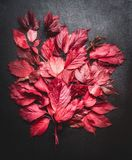 Red autumn leaves still life on dark background , top view. Fall leaves. Bunch Royalty Free Stock Photos