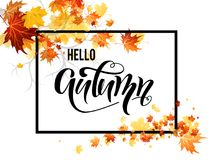 Autumn leaves branch Royalty Free Stock Photography