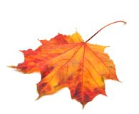Red autumn maple-leaf Royalty Free Stock Photos