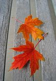 Red Autumn Maple Leaves Stock Photo