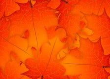 Red autumn maple leaves. Illustration. Autumn leaves background.  vector illustration
