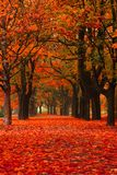 Red autumn in the park Stock Photo