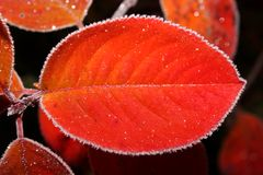 Red autumn sheet Stock Images