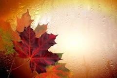 Red autumn sheet tree stock photo