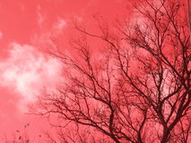 Red autumn sky. Tree on a background of red autumn sky Royalty Free Stock Photos