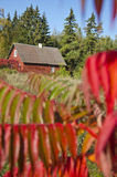 Red autumn time in village Stock Image