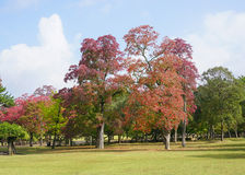 Red autumn tree at Mount Wakakusa in Nara Royalty Free Stock Photos