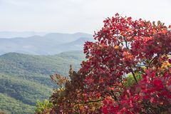 Red autumn tree in the mountains Stock Images